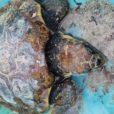 tartaruga Porto Cervo