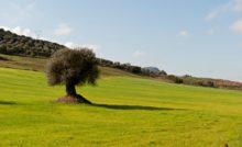 Biologico Sardegna