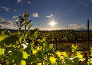 wine spectator siddura