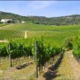 Città del Vino Arzachena