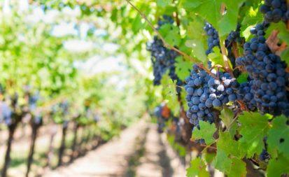 turismo frutta verdura